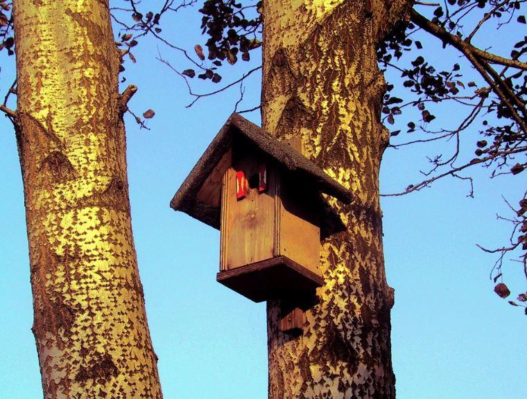 opname vogelhuisjes